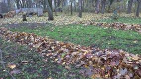 Folhas de bordo secas outonais varridas na pilha na jarda do jardim 4K vídeos de arquivo