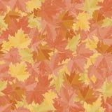 Folhas de bordo sem emenda do fundo do teste padrão Vetor do papel de parede da queda Terra da tela Imagens de Stock Royalty Free