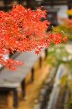 Folhas de bordo vistas na frente de um templo em Takao, Kyoto, Japão 2 Imagens de Stock Royalty Free
