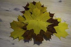 Folhas de bordos Foto de Stock