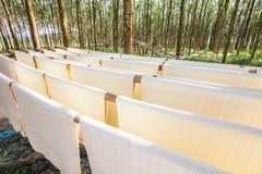 Folhas de borracha cruas em Tailândia Fotografia de Stock Royalty Free