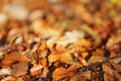 Folhas de Brown na terra Fotografia de Stock