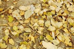 Folhas de Brown na terra Imagem de Stock Royalty Free