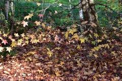 Folhas de Brown no assoalho da floresta fotografia de stock