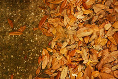 Folhas de Brown no concreto Foto de Stock Royalty Free