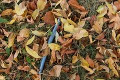 Folhas de Brown no gramado Fotos de Stock Royalty Free
