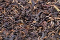 Folhas de chá de darjeeling fotografia de stock