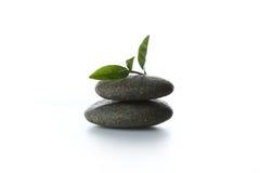 Folhas de chá e rocha Imagens de Stock