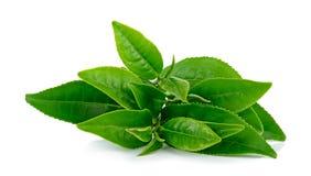 Folhas de chá isoladas no fundo branco Foto de Stock