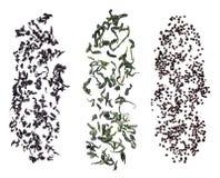 Folhas de chá de queda isoladas no branco ilustração do vetor