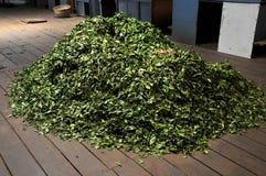 Folhas de chá secas Foto de Stock Royalty Free