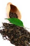 Folhas de chá verde imagens de stock