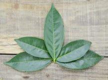 Folhas de chá verdes frescas no fundo de madeira Imagem de Stock