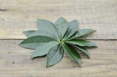 Folhas de chá verdes frescas no fundo de madeira Fotos de Stock
