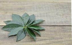 Folhas de chá verdes frescas no fundo de madeira Fotos de Stock Royalty Free
