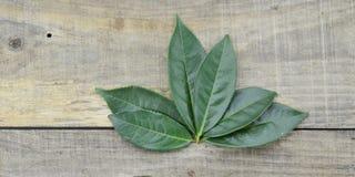 Folhas de chá verdes frescas no fundo de madeira Imagens de Stock