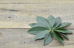 Folhas de chá verdes frescas no fundo de madeira Fotografia de Stock Royalty Free