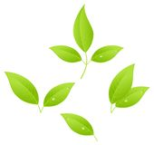 Folhas de chá Imagens de Stock