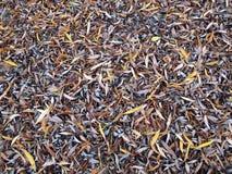 Folhas de chorar o salgueiro Imagens de Stock