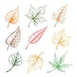 Folhas de ícones do esboço das árvores Fotografia de Stock