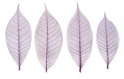 Folhas de esqueleto Imagens de Stock