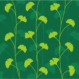 Folhas de Ginko do vetor Imagem de Stock