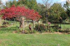 Folhas de giro e equipamento agrícola oxidado no outono Imagem de Stock Royalty Free