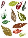 Folhas de Grunge Fotografia de Stock