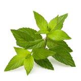 Folhas de hortelã Fotos de Stock