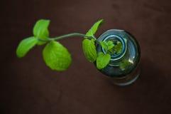 Folhas de hortelã Foto de Stock