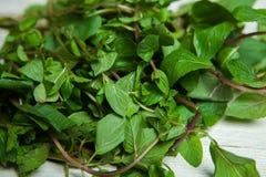 Folhas de hortelã cruas frescas isoladas no fundo branco Foto de Stock Royalty Free