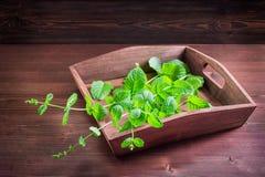 Folhas de hortelã da pimenta no fundo de madeira velho Fotos de Stock