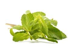 Folhas de hortelã em um fundo branco Imagens de Stock