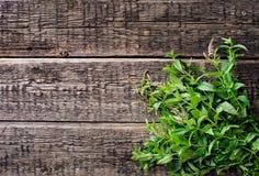 Folhas de hortelã fresca Imagem de Stock Royalty Free