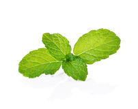 Folhas de hortelã fresca Fotos de Stock