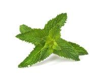 Folhas de hortelã fresca Imagens de Stock