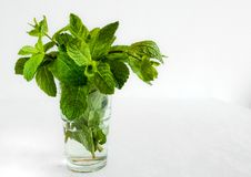 Folhas de hortelã fresca em um vidro no fundo branco Bom para refrescar bebidas saudáveis imagens de stock
