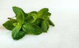 Folhas de hortelã fresca no fundo branco Bom para refrescar bebidas e finalidades médicas fotografia de stock royalty free