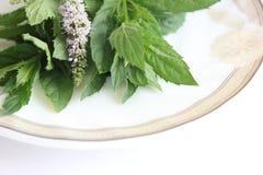 Folhas de hortelã fresca que encontram-se em uma placa fotos de stock royalty free
