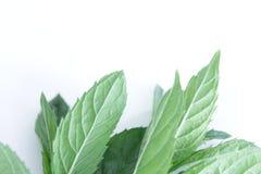 Folhas de hortelã fresca que encontram-se no fundo branco fotografia de stock royalty free