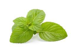 Folhas de hortelã isoladas no branco Fotos de Stock