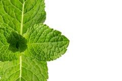 Folhas de hortelã isoladas no fundo branco Imagens de Stock Royalty Free