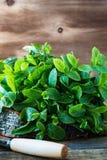 Folhas de hortelã orgânicas frescas na prancha de madeira rústica Fotografia de Stock Royalty Free