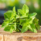 Folhas de hortelã verdes Fotografia de Stock