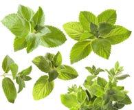 Folhas de hortelã verdes Fotografia de Stock Royalty Free