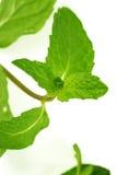 Folhas de hortelã verdes frescas Foto de Stock