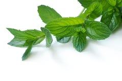 Folhas de hortelã Imagens de Stock