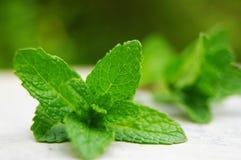 Folhas de hortelã Imagem de Stock