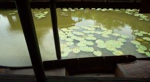 Folhas de Lotus no canal Fotos de Stock Royalty Free