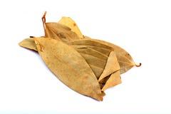 Folhas de louro Fotos de Stock